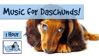 Dachshund are a brilliant breed for many different sized homes and ...