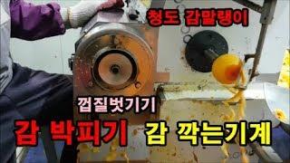 감깍는기계 감박피기 박피기사용방법 청도감말랭이 청도농산…