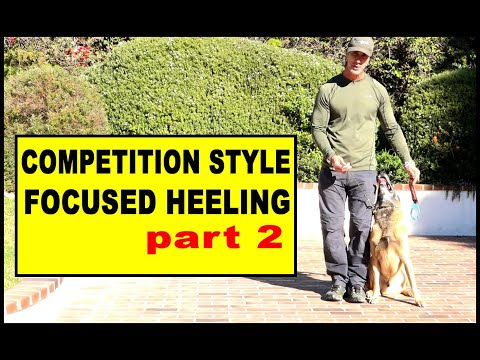 Competition Focused Heeling part 2 - Dog Training Video