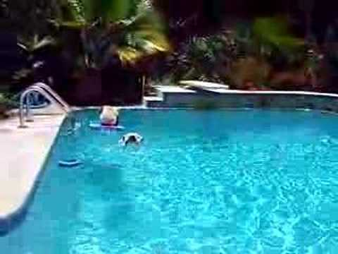Swimming Bulldog Becomes a Lifeguard and Saves the Pug
