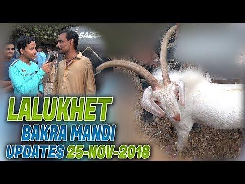 Lalukhet Bakra mandi 25-11-2018 Latest Updates ( Jamshed Asmi Informative Channel) In Urdu/Hindi