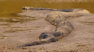 Гиганты мира животных  National Geographic документальные фильмы 2017 hd