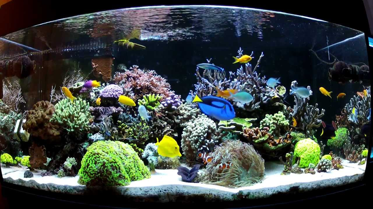 570l Akwarium Morskie Luty 2012 Akwarium Morskie