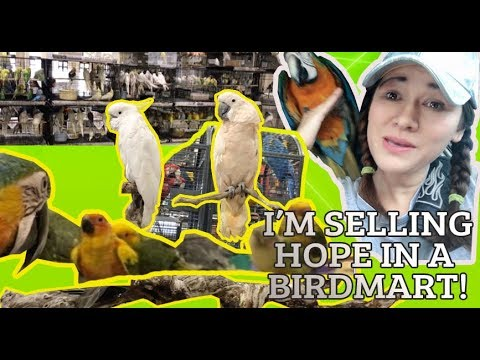 I'm Selling HOPE In A  Birdmart! Everybody's Bird Mart | CONVENTION
