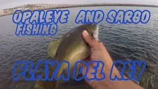 OPALEYE  AND SARGO FISHING PLAYA DEL REY