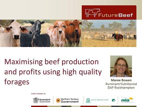 Maximising beef production and profits with high quality forages
