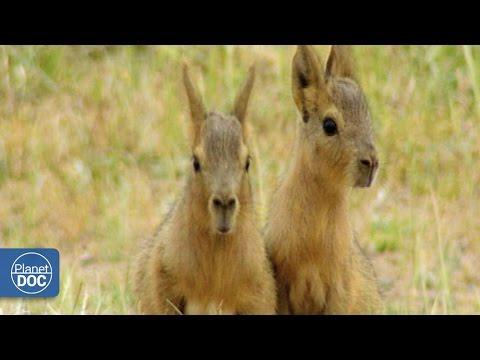 patagonia:-vadés-peninsula