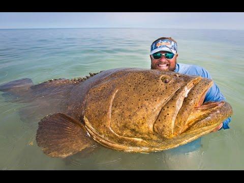 巨大魚を釣り上げるまで