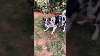 How To Teach Your Dog Easy Tricks  {DOG TRAINING} #shorts
