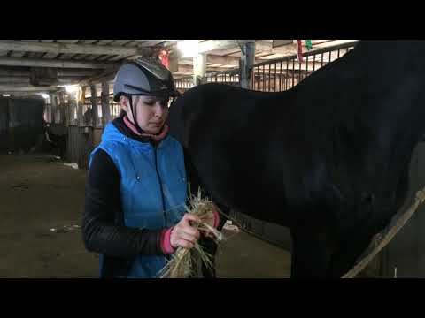 Вопрос: Как ухаживать за лошадью зимой?