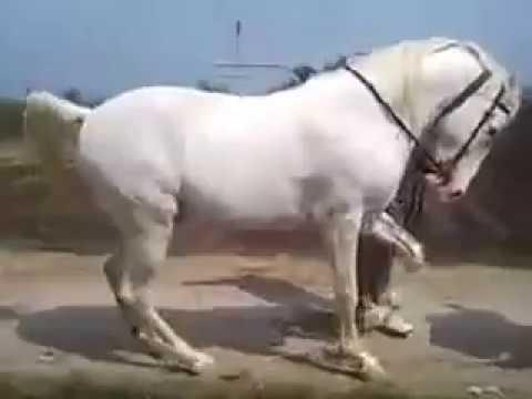 Derap langkah kaki kuda mengikuti alunan suara gendang.