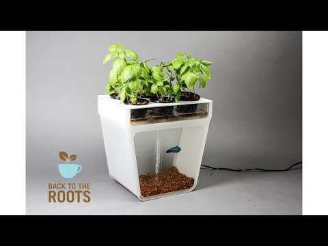 Best indoor Garden/Plants Invention - Innovation in plants