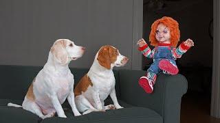 Chucky Pranks Dogs: Funny Dogs & Michael Myers Defeat Chucky