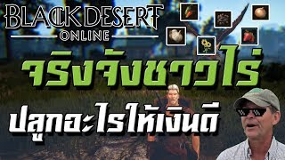 Black Desert Online : จริงจังชาวไร่ ปลูกอะไรแล้วเงินดี