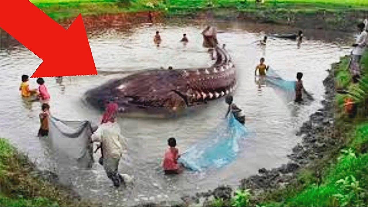 Они Поймали Самую Большую Рыбу в Мире