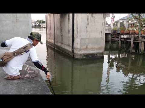 Ultra Light Fish Games Hampala Chao Phraya river