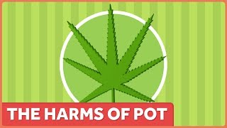 The Harms of Marijuana