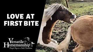LOVE AT FIRST BITE (Manzer's introduction to the herd) // Versatile Horsemanship