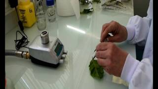 Isolation of the bacterium Xylella fastidiosa from plant samples Anses LSV Angers