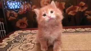 20151108 кот BRUCE - 1 месяц