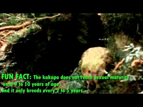 Real Facts About The Kakapo
