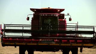 case ih 2388 combine on 10 6 2011