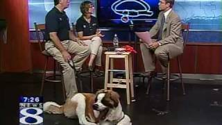 Bark Busters - Dog Training - Summer Tips For Your Dog