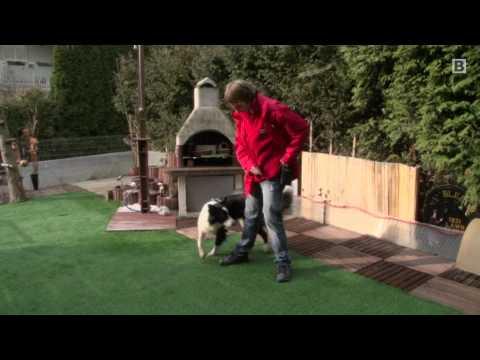 Lukas und Falco - Ein tierisches Trickdog-Duo!