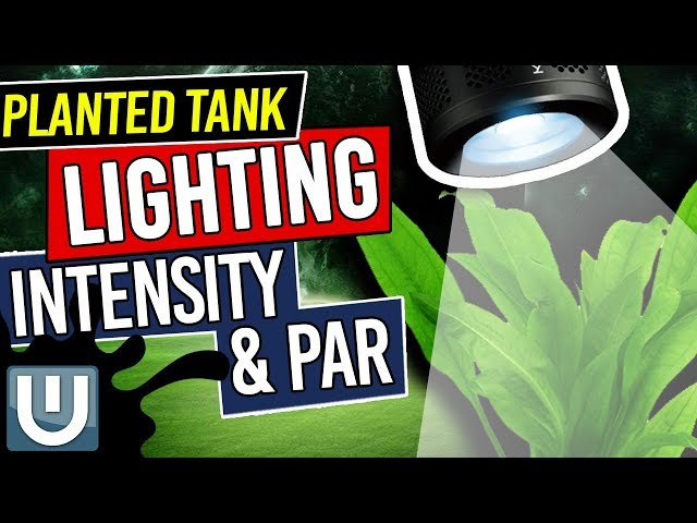 Light Intensity and PAR in Planted Tank Lighting - Planted Aquarium Lighting Guide - Part 2