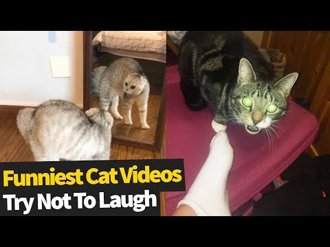 Try Not To Laugh Funny Cats! | Ultimate Cat Compilation 2019