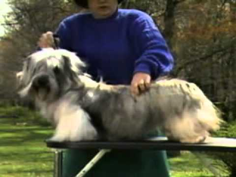Skye Terrier - Chapter 3