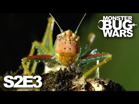 MONSTER BUG WARS   Ultra Violence   S2E3
