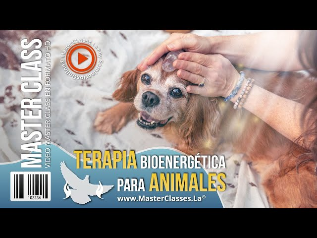 Terapia bioenergética para animales - Cómo mejorar la salud de tu mascota.