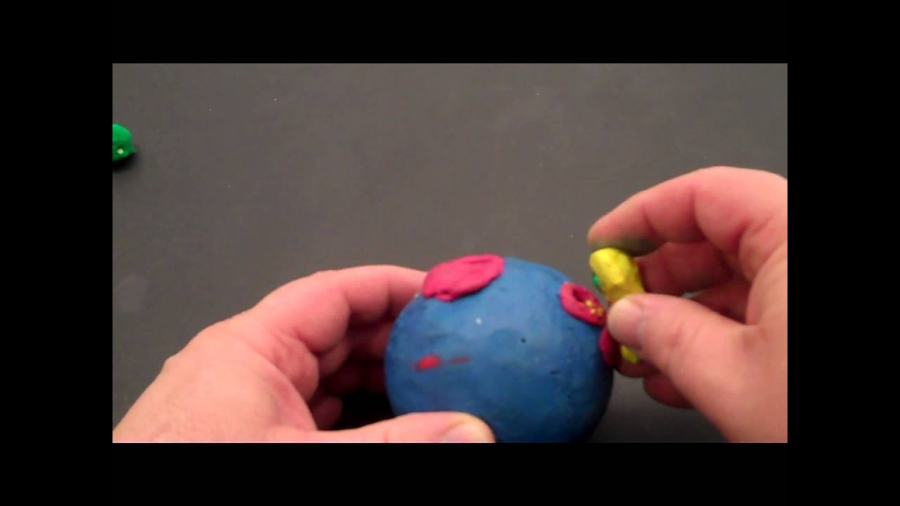 how to make a 3d model of insulin and glucose relationship