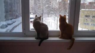Коты гуляют