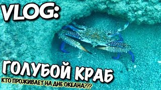 VLOG: ТУРЕЦКИЙ ГОЛУБОЙ КРАБ  / Андрей Мартыненко