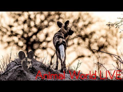 Animal World LIVE With Brent Leo-Smith | World Wildlife Day