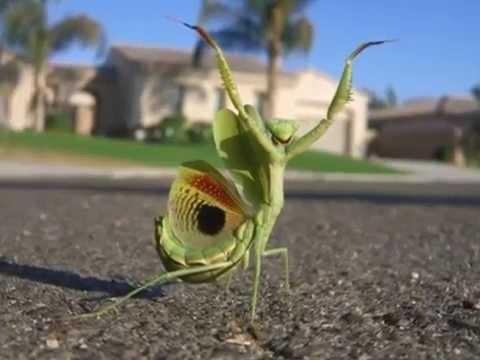 насекомые — новые прикольные фото, анекдоты, видео, посты