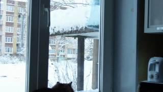 У кота сериал про птичек