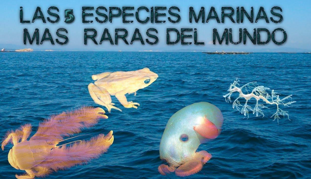 Las 5 especies marinas m s raras del mundo youtube for Las habitaciones mas raras del mundo