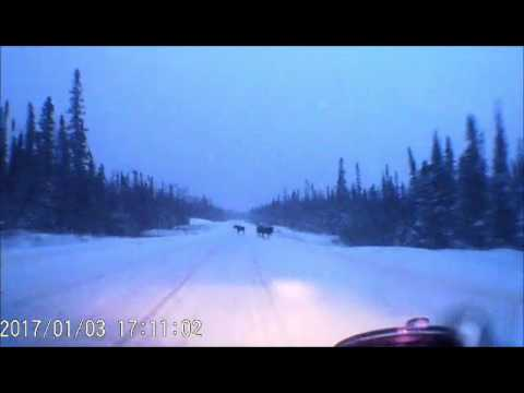 Video shows NW Ontario man's narrow miss with moose