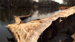 LETHE (A River of Unmindfulness)