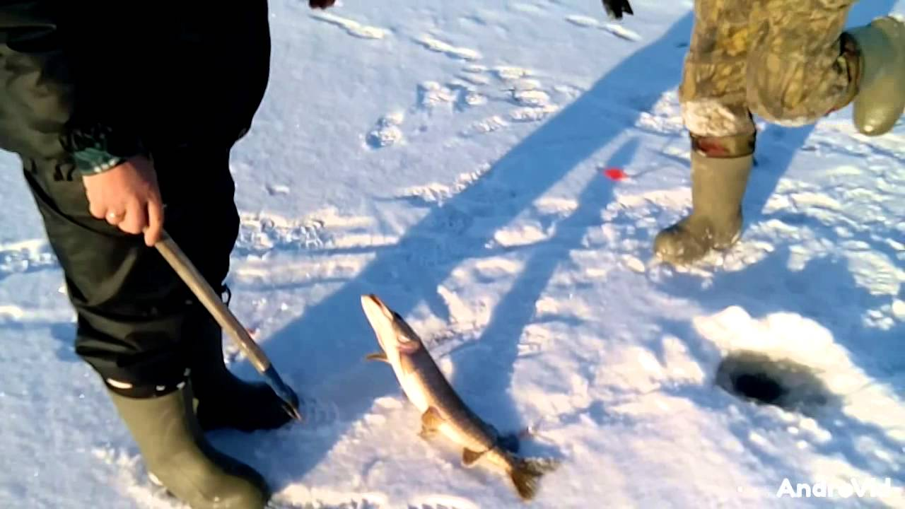Платная рыбалка зимняя в чувашии