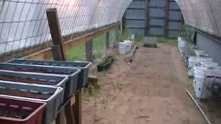 Greenhouse Homemade With Cattle Panels