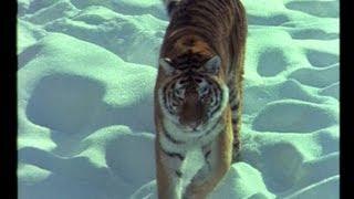 BBC - Nature Gladiators 1 - Wildkatzen - Film