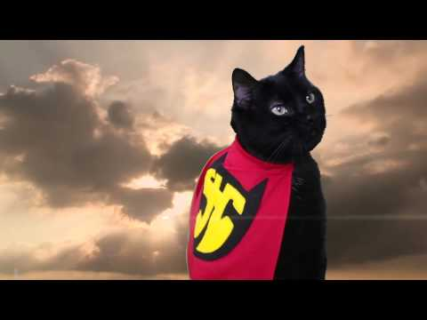 Super Hero Cat (Official Music Video) – N2 the Talking Cat S2 Ep18