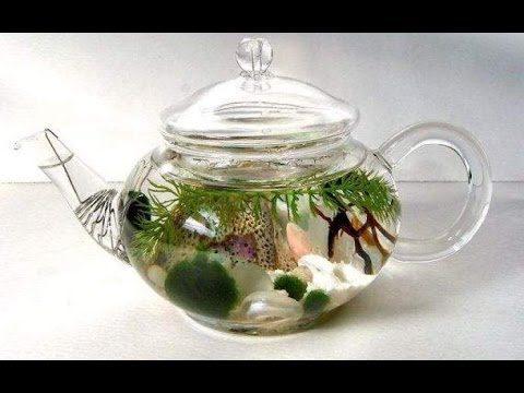 Awesome indoor water garden inspirations youtube - Indoor water plants list ...