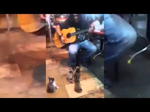 Adorable video shows busker performing to group of kittens in Malaysia
