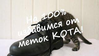 На 100% ИЗБАВИМСЯ от меток КОТА!(Бывает так, что ваш любимый кот