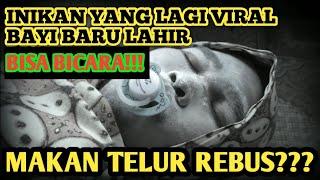 Gambar cover BAYI BARU LAHIR BICARA TENTANG KORONA - Parodi Keluarga Bocor